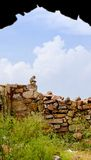 Rhesus Macaque at Tughlaqabad Fort, Delhi, India Royalty Free Stock Photo