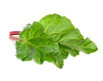 Rheum plant.  on white.  Stock Photo