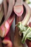 Rheum rhabarbarum. Fresh raw rhubarb sticks closeup Stock Photo