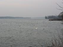 Rhin-Fluss während des Winters Stockfotografie
