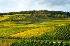 Rhine dolina z winnicami Obraz Stock