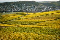 Rhine dolina z winnicami Obrazy Royalty Free