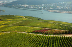 Rhine River, Germany. Colorful Vineyard with the rhine river stock photography