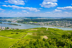 Rhine river and green vineyards near Bingen am Royalty Free Stock Photography