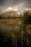 Rhine River Swamp. Once a year the Rhine River is flooding and a large swamp is created Royalty Free Stock Images