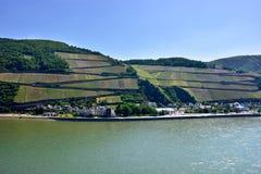 Rhine River Vinyards Royalty Free Stock Photos
