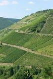 The Rhine Valley Vineyards Royalty Free Stock Photos
