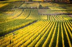 Rhine valley with vineyards. Rudesheim, Germany stock images