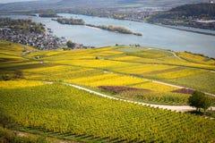 Rhine valley with vineyards. Rudesheim, Germany royalty free stock image