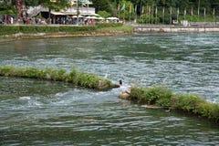 Rhinefall. The biggest waterfall in Europe Royalty Free Stock Image