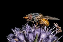 The fly sit in flower stock photo