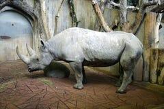 Rhino 1 Stock Photography