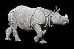 Rhino. Highly detailed young rhino on black background royalty free stock photography