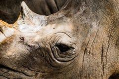 rhino Lizenzfreie Stockbilder