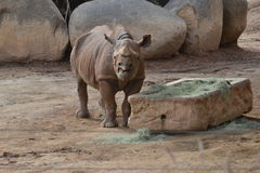 rhino Stockfotos