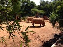 rhino Lizenzfreie Stockfotografie