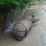 rhino Fotografia de Stock Royalty Free