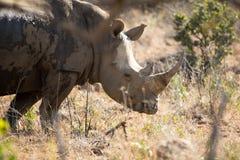 rhino Stockbilder