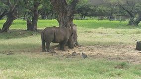 rhino Lizenzfreie Stockfotos