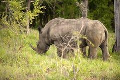 Rhino, Stock Image