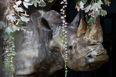 rhino Foto de archivo libre de regalías