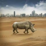 rhino Immagini Stock Libere da Diritti