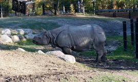 rhino Fotografía de archivo libre de regalías