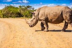 rhino Imagem de Stock