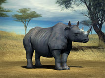 Rhino. Adult Rhino in the Serengeti Royalty Free Stock Photography