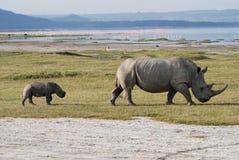 Rhino and Baby stock photography