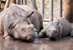 Rhino and baby Stock Photos