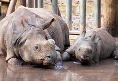 Rhino and baby Stock Photos