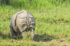 Rhino back shot Royalty Free Stock Photos