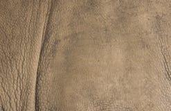 Rhino background. The background of the film Rhino royalty free stock photos