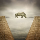 Rhino balanced on the line Stock Image