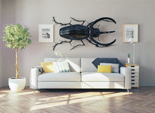 The  rhino beetle in the  room Stock Images