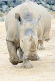 Rhino charging Stock Photo