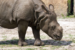 Rhino in a clearing Stock Image