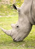 Rhino closeup Stock Photo