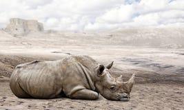 Rhino in the desert Royalty Free Stock Photo