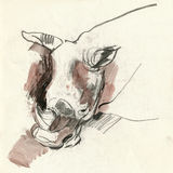 Rhino, drawing Royalty Free Stock Photo