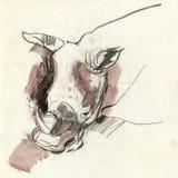 Rhino, drawing Royalty Free Stock Photo