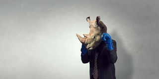Rhino dressed in business suit royalty free stock image