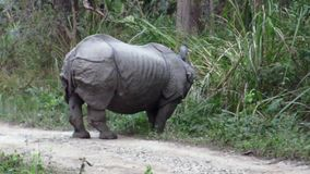 Rhino Eating stock video