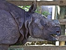 Rhino eating stock photography