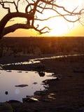Rhino. In the Etosha National Park, Namibia Royalty Free Stock Photography