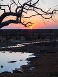 Rhino. In the Etosha National Park at sunset, Namibia Royalty Free Stock Image