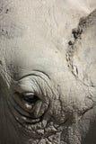 Rhino eye Royalty Free Stock Images