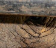 Rhino eye. royalty free stock photos