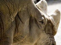 Rhino eye detail Stock Photos